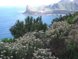 The view over Hout Bay