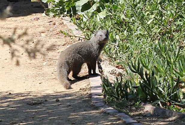 Wildlife on Table Mountain
