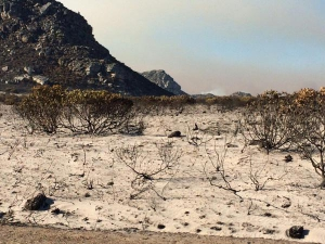An area of the Silvermine Nature Reserve a few days after the fire.